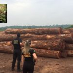 Polícia Federal deflagra Operação KHIZI para combater extração ilegal de madeira na Bahia, Ceará, Maranhão, Pará, Piauí e Rio Grande do Norte