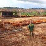 IBAMA apreende mais de 2 mil metros cúbicos de madeira ilegal na Rodovia Transamazônica