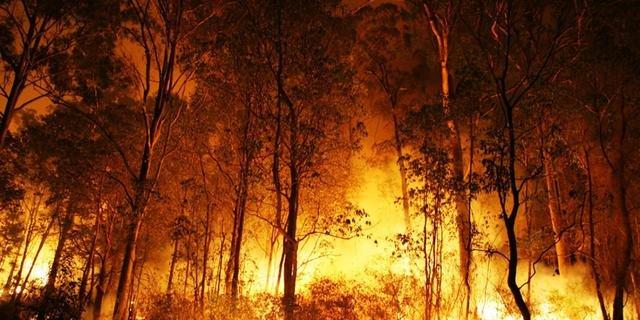 Queimadas da Floresta Amazônica no Pará foi comandada pelo Whatsapp