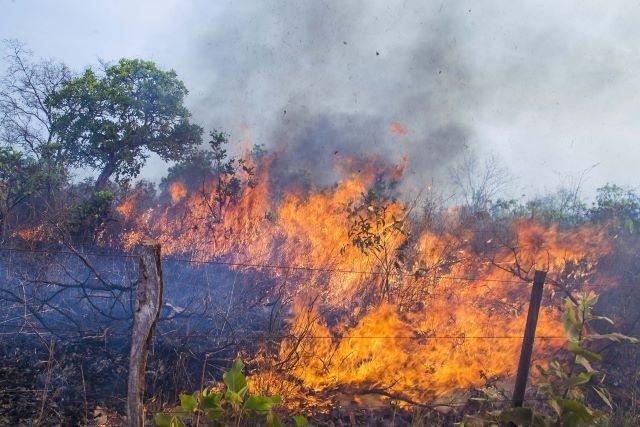 Queimador da Floresta no Amazonas é multado e deve pagar R$ 6 milhões