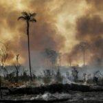 Brasil: Defensores da floresta na mira de redes criminosas