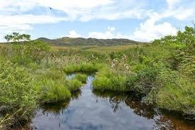 Prazo para entrega do Ato Declaratório Ambiental é prorrogado até 31/10