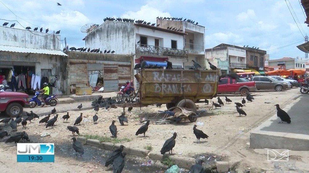 Santa Inês MA, urubus lotam ruas e ficam próximos a comércios na cidade