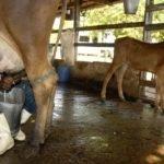 Meta da agropecuária é abastecer mercado interno, diz Tereza Cristina