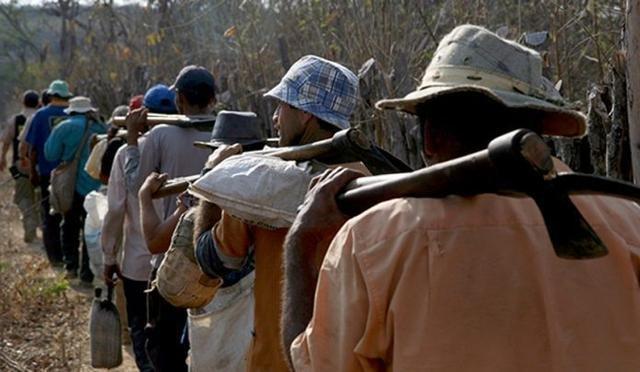Em 15 anos, mais de 8 mil pessoas foram resgatadas de trabalho escravo no Maranhão