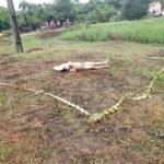 CAPINZAL DO NORTE: Homem é morto a golpes de facão