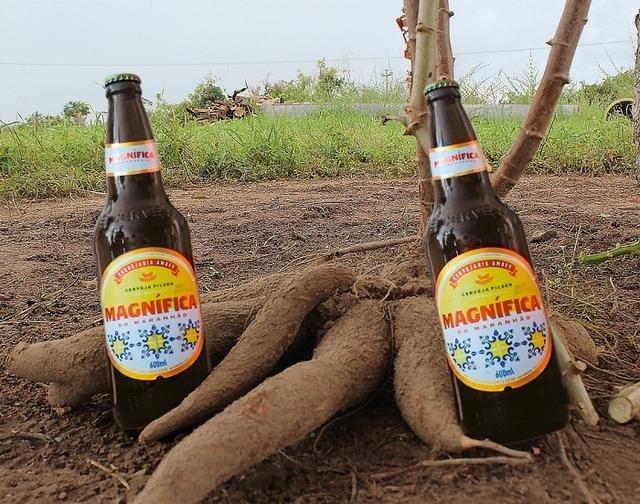 A cerveja de mandioca já gerou cerca de 3,6 mil empregos no Maranhão