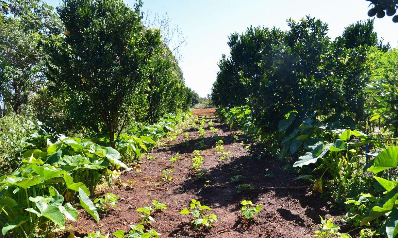 Programa de Aquisição de Alimentos tem R$ 72,9 milhões liberados pelo governo federal