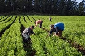 Garantia-Safra 2020/2021: Ministério da Agricultura abre prazo para agricultores familiares